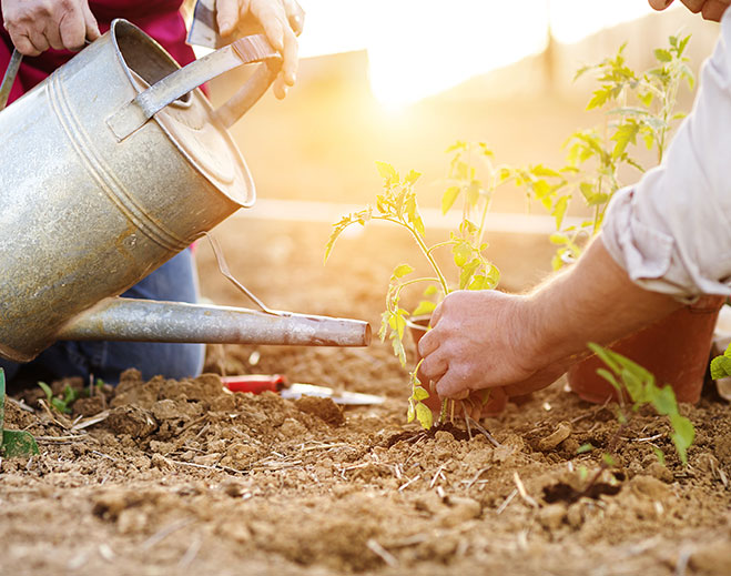gardening-exercise-healthy-living